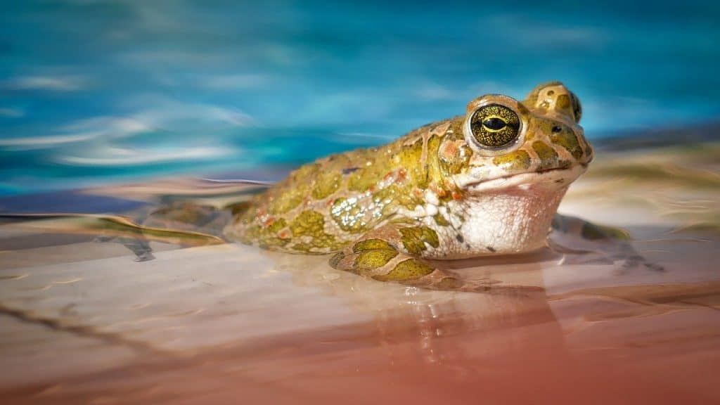 a frog in a swimming pool