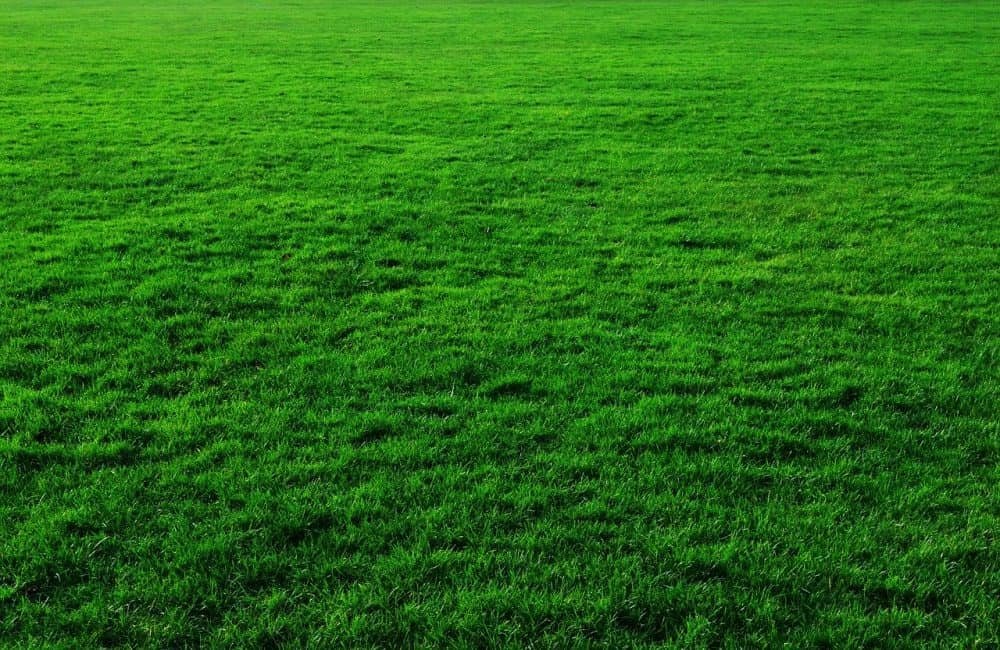 a lush green lawn that may need lime