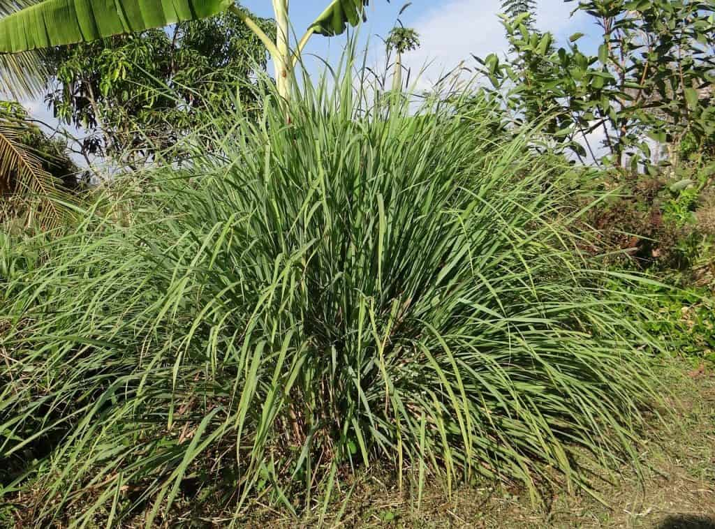 tall grasses around a swimming pool