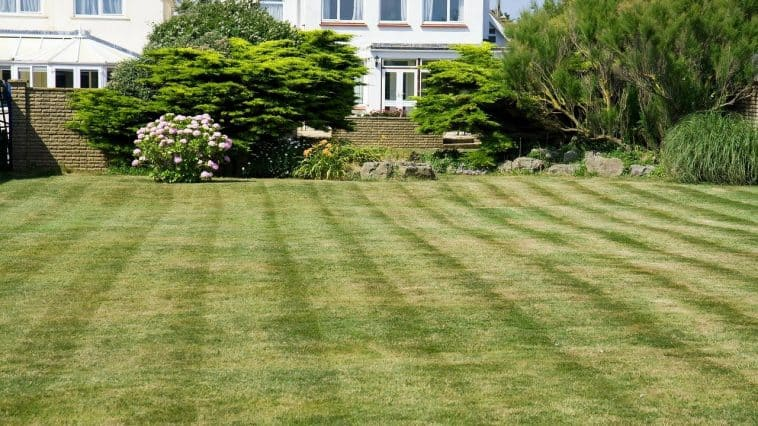 green lawn in the summer