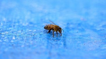 bee near a swimming pool