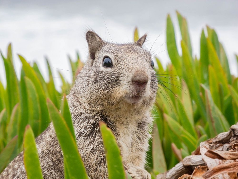 a squirrel in a backyard patio